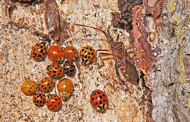 """einblick in den vortrag """"insekten des waldes""""  pro natura"""
